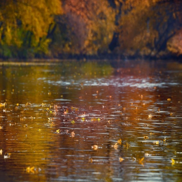 Colorful Leaves on Water in Autumn