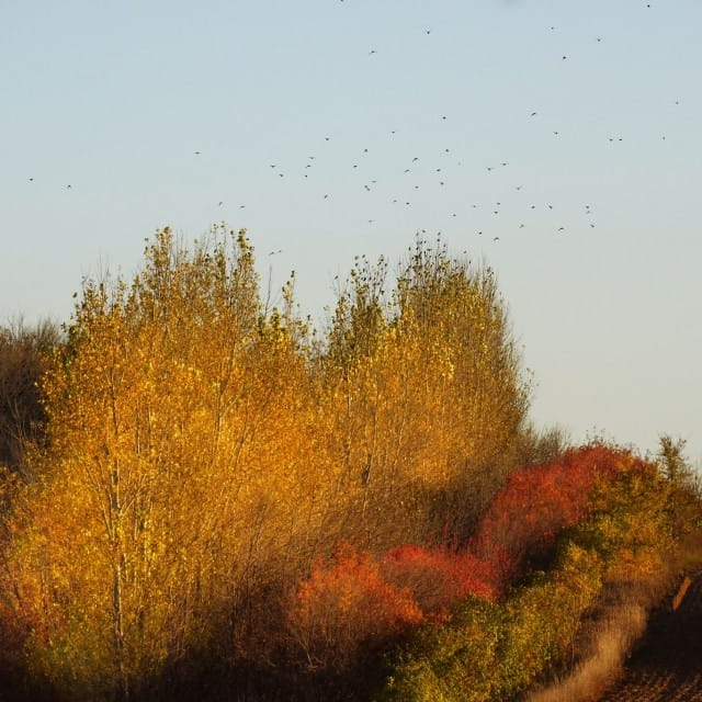 Painterly Trees & Birds in Fall